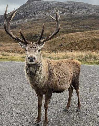 """""""Callum of the Glen"""" - Our Friendly Visitor"""